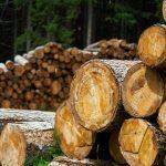 Cut Trees - Lumber